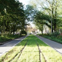 Tram tracks through Frederiksplein park.