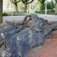 Huge metal fallen tree statue in Frederiksplein park.
