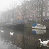 Geese in a row in the mist.