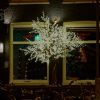 Awesome holiday decorated tree outside a restaurant on Prince Hendrikkade