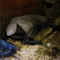 This horse was snoring!