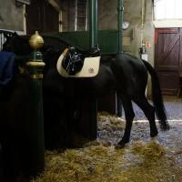 A cadillac horse