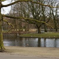 Ice-free Vondel park