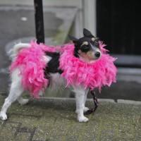 Even Alfie is fabulous today.